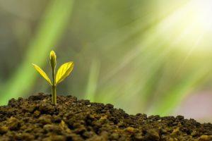 光に照らされる芽